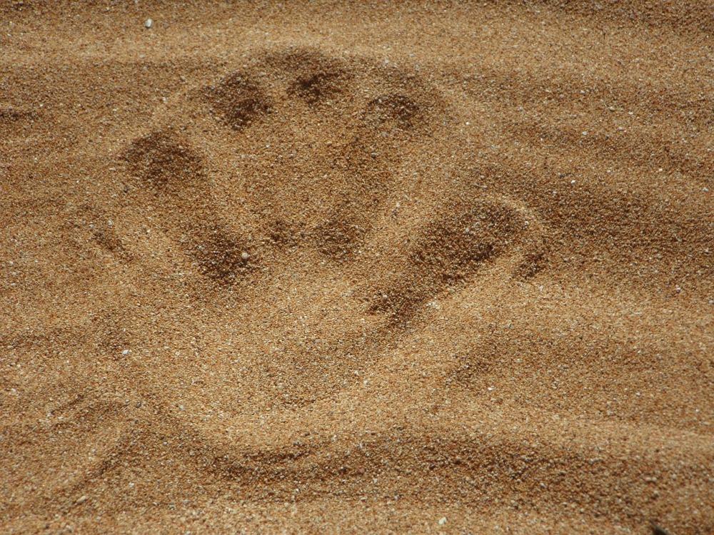 sand-138879_1280